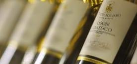 Polvaro visits & wine tasting