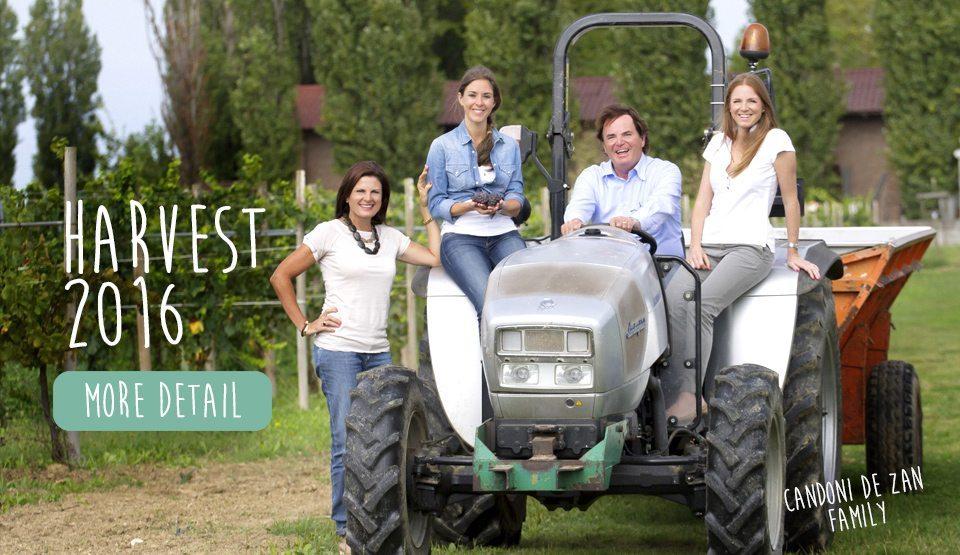 candoni-wines-harvest-2016