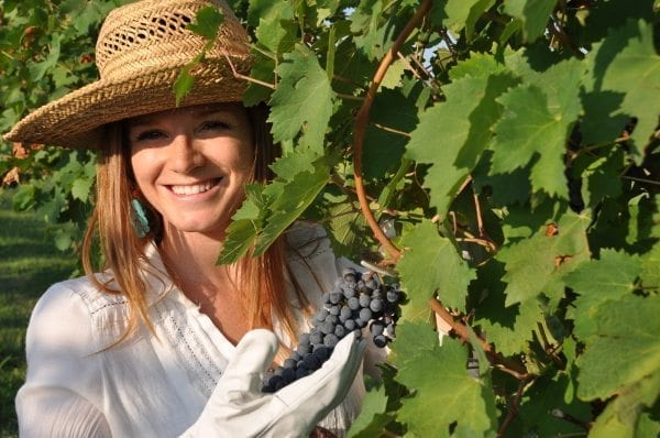 Italian Wine Harvest | Ripe Grapes | Candoni Dezan Wines